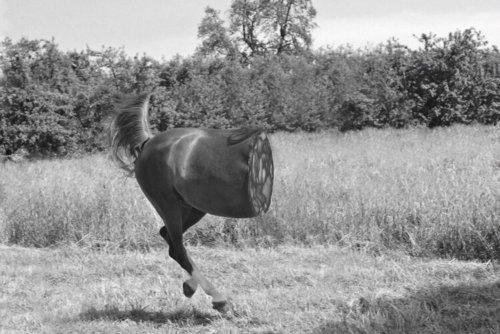 Wurst | Pferd | Collage