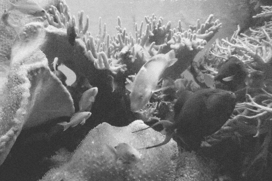 Fische im Aquarium des Kölner Zoo