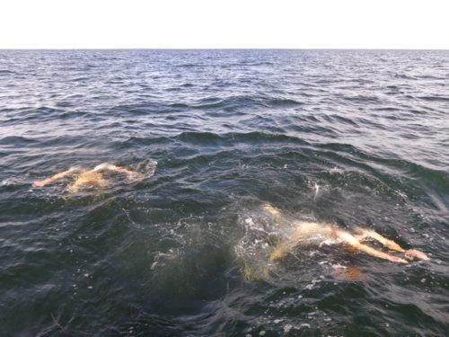 Menschen | Schwimmen | Kopflos |Meer