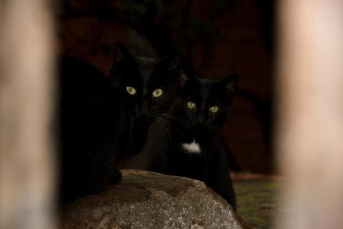 Katzen | Spanien | Musical