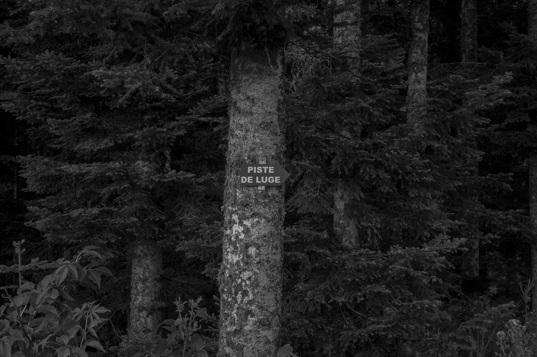 Tree | Sign | Type